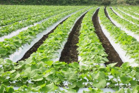 土壌微生物を活性化する「本格にがり」