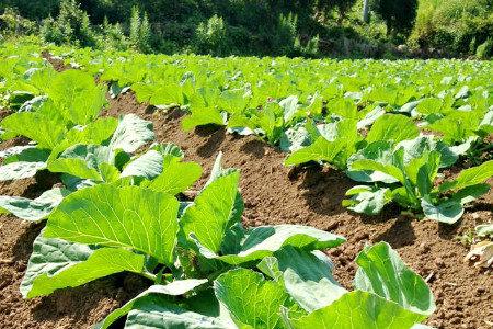 土を活性化し、植物を育む天然成分