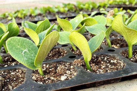 植物の力を引き出す強い生育