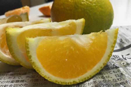 中晩柑(柑橘) 晩秋肥(10月) 隔年結果防止、減酸