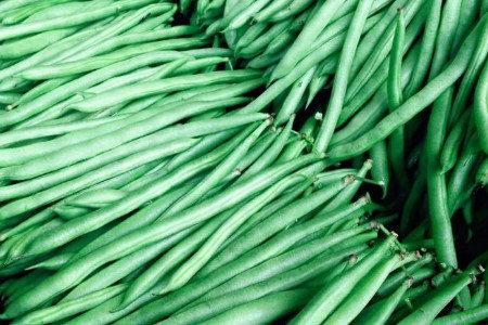 インゲン豆・絹サヤ等 発根促進、成疲れ防止、収量増加(増収)対策