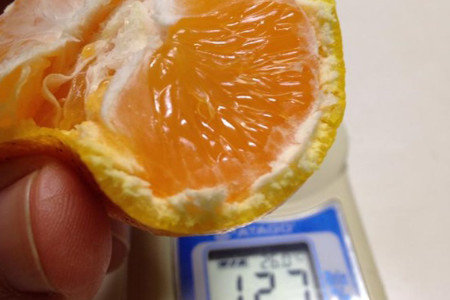 温州みかん(柑橘) 夏(8-9月) 糖度向上、食味向上、着色促進