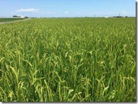 裏作の土づくりを兼ねた水稲栽培事例