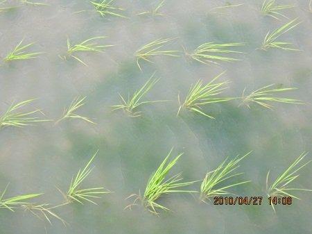 無処理区の藻の発生.JPG