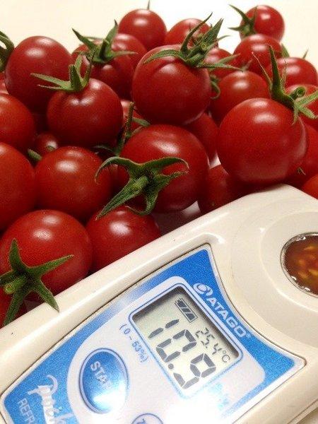 ミニトマト(糖度食味向上)塩害対策の事例