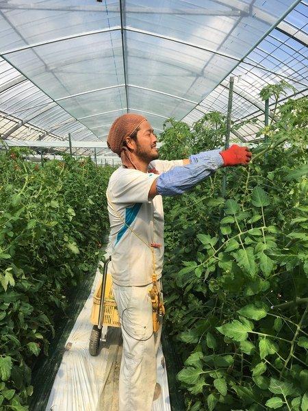 中玉トマト カニキング~導入増収事例
