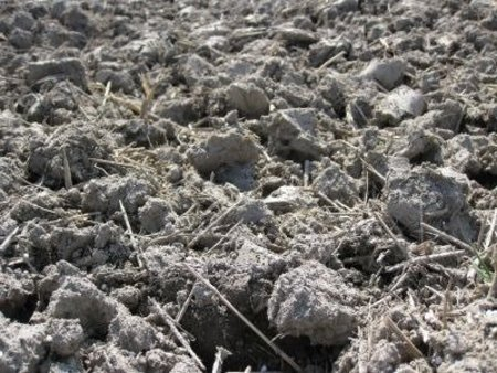 フロー剤(クロルピクリン)による土壌消毒後の徒長防止